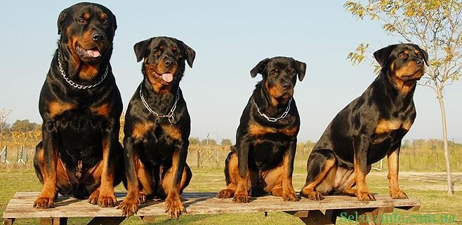 Собаки для охраны частного дома: все за и против.